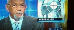 TV News Epic Fails (23 pics)