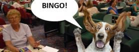 People you might find in a bingo hall as depicted by dogs